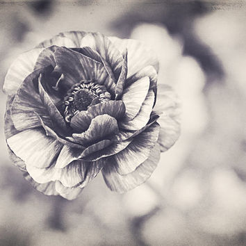 "Black and White Photography, ""Coming Up"" Fine Art Metallic Print Home Decor Flower Garden Rose Gift for Her Floral Photo Spring Bloom Nature"