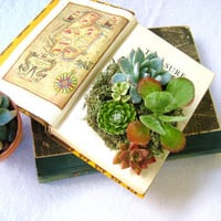 Succulent Centerpiece Vintage Book Planter for the Book & Plant Lover DIY