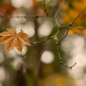 Fine Art Photo Print - Fall Leaves Woodland Rustic Country Brown Neutral Bokeh Home Decor Wall Art - 8 x 10