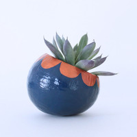 Air Plant Planter with Air Plant - Navy and Copper Scallops