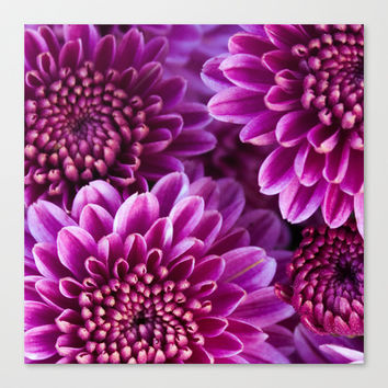 Mums 2 Canvas Print by Legends of Darkness Photography