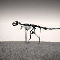 Man's Best Friend - Dinosaur Skeleton Photo - 6 x 9 Fine Art Archival Photograph