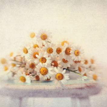 daisies on a stool Art Print by Sylvia Cook Photography