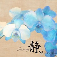 Blue Orchid Serenity Photograph, Fine Art Photograph, Nature Photograph