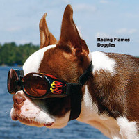 Dog Eye Care: Doggles?- Sunglasses for Dogs at Drs. Foster and Smith