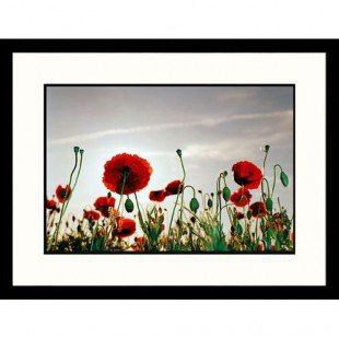 Great American Picture Poppy Field Framed Photograph - IS1030329
