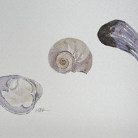 Beach Seashore Art Watercolor, Quahog, Clam, Mussel, Moon Snail Seashells Original Art Painting, Purple Ocher, Natural History,  8 x 10