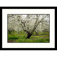 Great American Picture Cherry Orchard Blossoms, California Framed Photograph - Inga Spence - IS98823