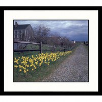 Great American Picture Daffodils on Path Framed Photograph - NE120-S-BK