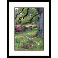 Great American Picture Magnolia Plantation Garden, Charleston, South Carolina Framed Photograph - Ji