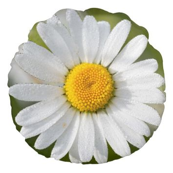 Beautiful Oxeye Daisy Round Throw Pillow