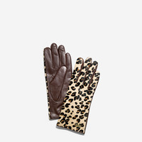 Haircalf Leather Glove