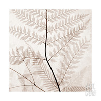 Ferns II Giclee Print by Steven N. Meyers at Art.com