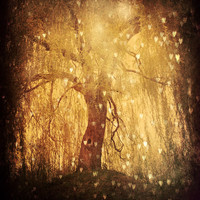 Magical Tree Hearts - Fine Art Photography 8x10 - Dreamy Forest Golden Light - Lone Tree Branches - Tonight, Tonight