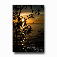 Sunset Photography Silhouette tree branches leaves lake orange black water greeting card calendar