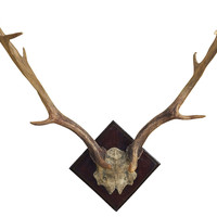 Fallow Deer Antler Wall Decor, Natural, Antlers, Horns, Taxidermy & Faux-Taxidermy