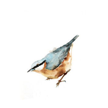 Nuthatch, Animal art, Watercolor painting bird print, Wall decor garden  aquarelle reproduction.