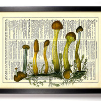 Fungi Collection 4 Repurposed Book Upcycled Dictionary Art Vintage Book Print Recycled Vintage Dictionary Page  Buy 2 Get 1 FREE