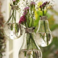 Hanging Lightbulb Garden .