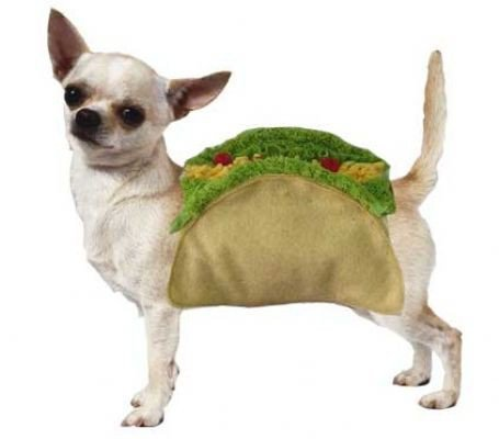 Taco Dog Costume for Halloween