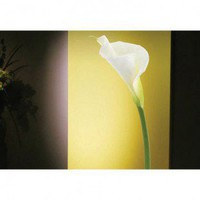 ADZif Foto Calla Lily Wall Decal - F1110 - All Wall Art - Wall Art &amp; Coverings - Decor