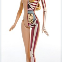 Anatomical Barbie by Jason Freeny