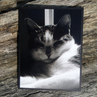 Tabby Cat Face Black White Photo Card