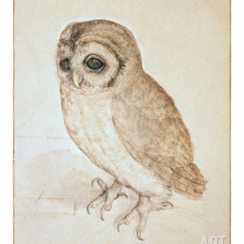 The Screech Owl Giclee Print by Albrecht Dürer at Art.com