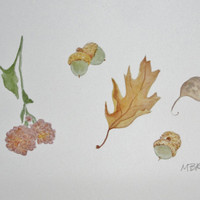 Signs of Autumn Fall Watercolor Painting, Fall Flowers, Oak Leaf, Acorns, Original Nature Painting Natural History,  8 x 10