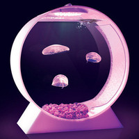Desktop Jellyfish Tank by Alex Kickstarter