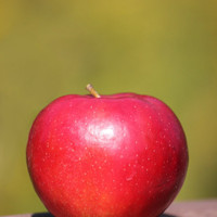 "Apple Home Decor - 5x7 Inch Fine Art Red Fall Apple Photography - ""Harvest Crisp"""