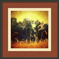 Old Gold... Framed Print By Alexandra Cook