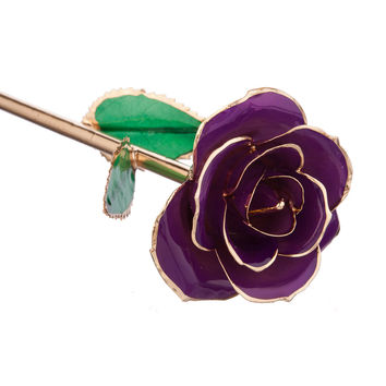 Purple Passion 24kt Gold Dipped Rose Steven Singer Jewelers