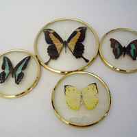 Vintage Real Butterflies in Frames