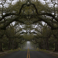 "Dreamy Oak Tree Pascagoula Street Mississippi Photo Art 12x12"" Print."