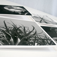 5 Black and White Photographic Greeting Cards, Modern Monochromatic Prints on Thick White 250gsm Paper with Envelopes, 148mm x 148mm card