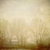 Tree Photo 12x18 Nature Fine Art Photography