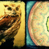 Owl Mandala Altered Photo Print 8x10 by kmichel on Etsy