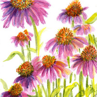 Echinacea - Purple Coneflowers Watercolor Original