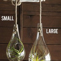 Recycled Modern Glass Bubble Drop Hanging Terrarium (Small)