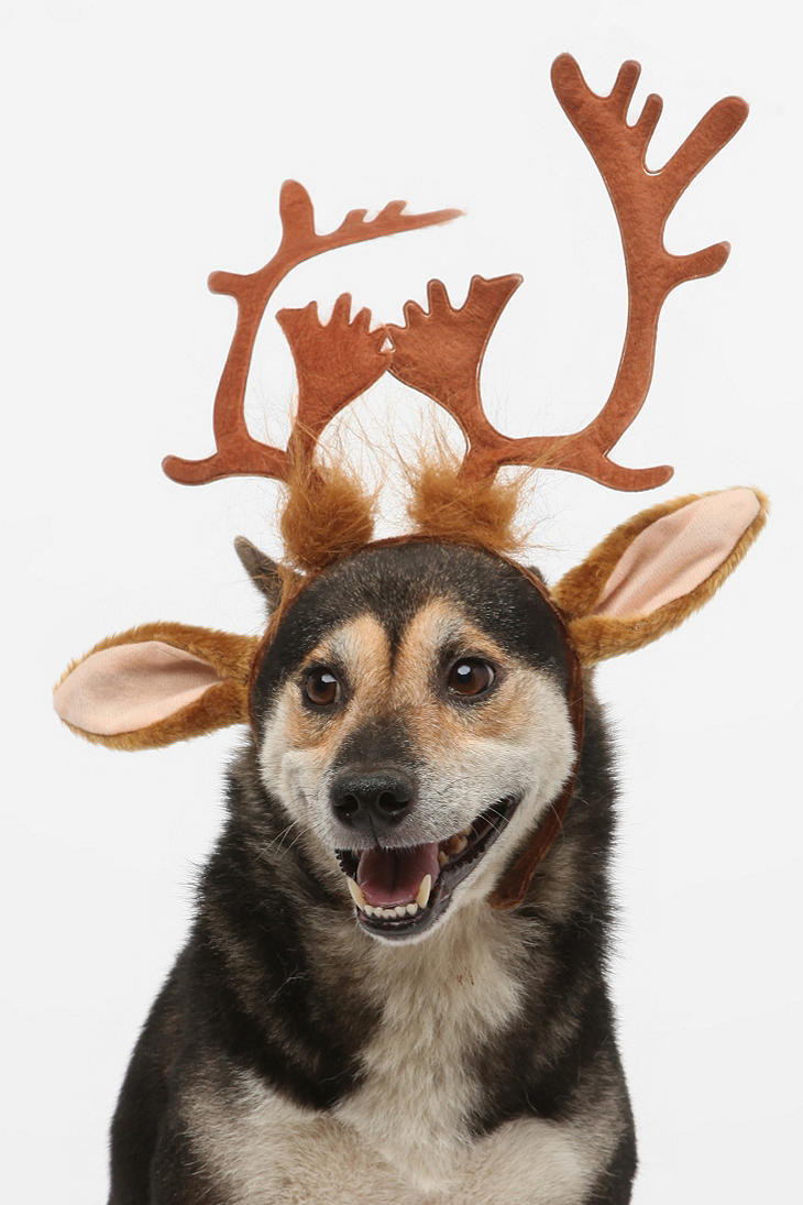 how to clean antlers for dogs