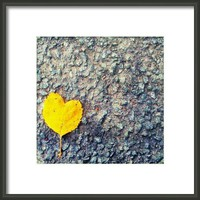 As Little Heart  Framed Print By Alexandra Cook