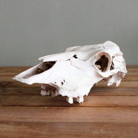 Vintage Texan Desert Cow Skull