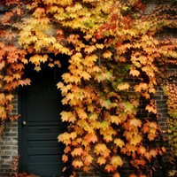 Fall Leaves Photograph  vines autumn building by firstlightphoto