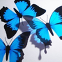 10 x 3D Butterflies Ulysses Blue Black Butterfly scapbooking nursery baby bedroom bath kitchen decor
