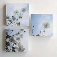 Afternoon Shadows  set of 3 photo blocks by SusannahTucker on Etsy