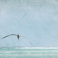 "Ocean photo romantic flying seagull teal grunge 8x12"" print"