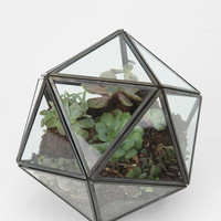 Turning Triangles Terrarium