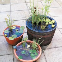 DIY Portable Outdoor Water Garden | Shelterness