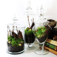 Apothecary Jar Terrarium Set Live Moss Twigs and by doodlebirdie